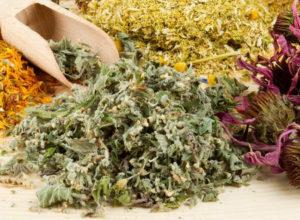 6 лучших лекарственных трав, которые должны быть в каждом доме